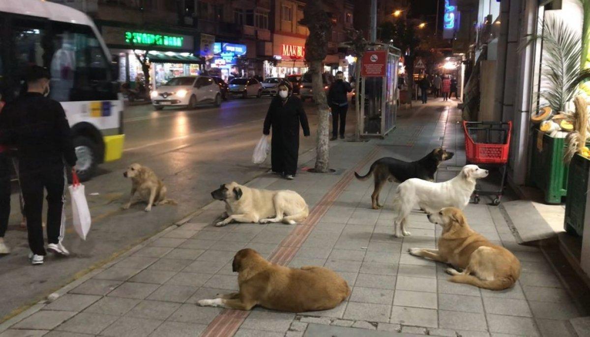 Bursa da sokak köpekleri tehlike saçıyor #1