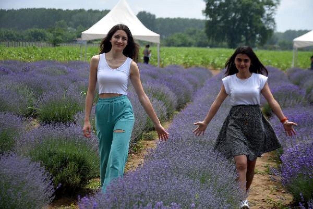 Edirne de mor tarlalar festival alanına döndü #4