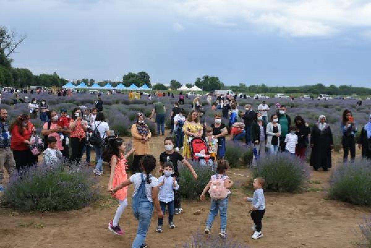 Edirne de mor tarlalar festival alanına döndü #2