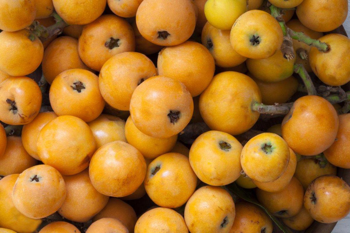Yeni dünya meyvesi: Malta eriğinin faydaları nelerdir #1