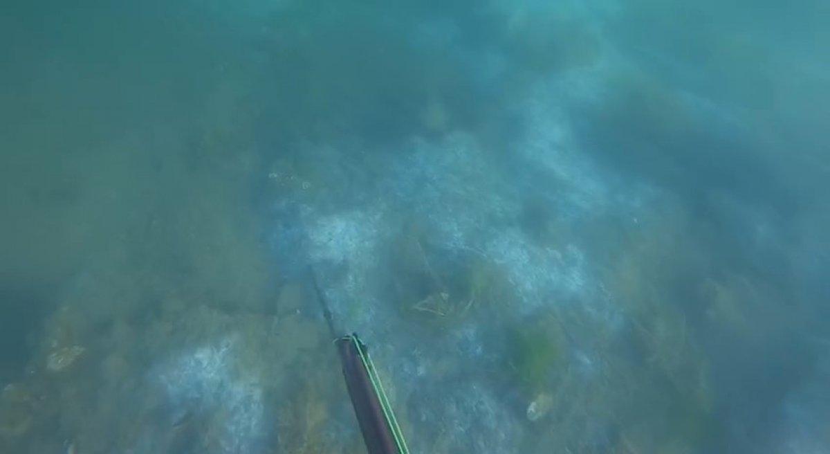 Müsilajın deniz altındaki tahribatı böyle görüntülendi #3