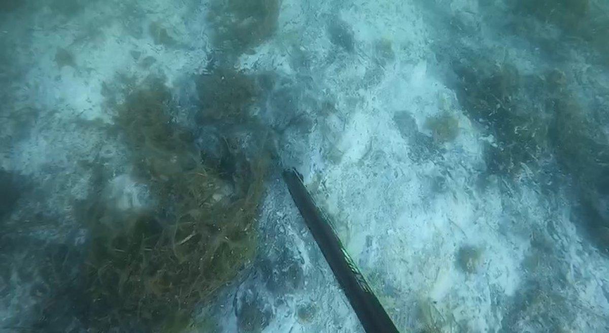 Müsilajın deniz altındaki tahribatı böyle görüntülendi #4