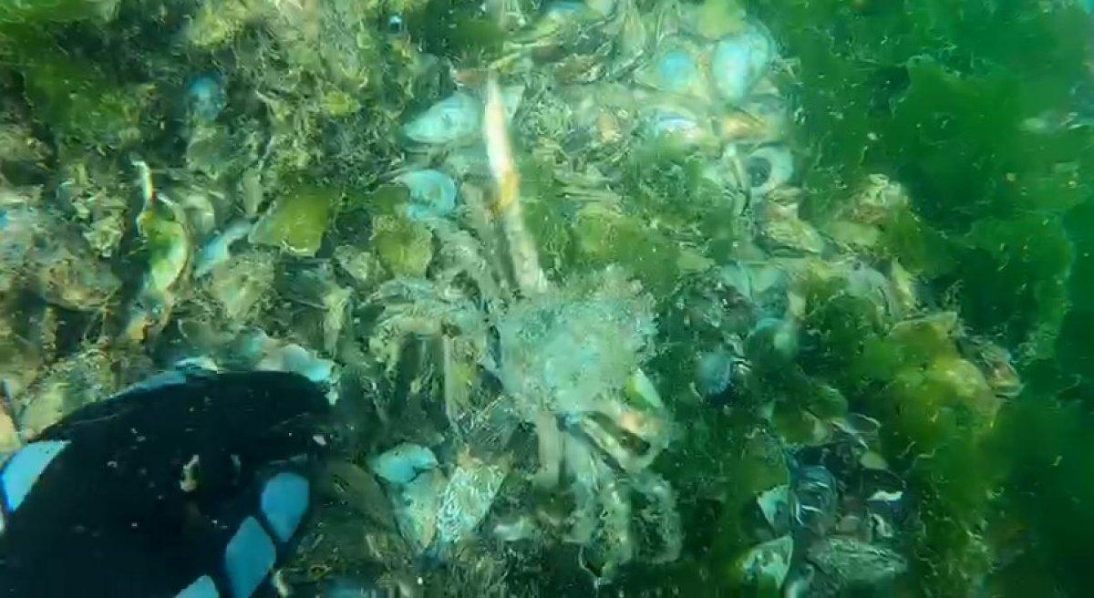Müsilajın deniz altındaki tahribatı böyle görüntülendi #2