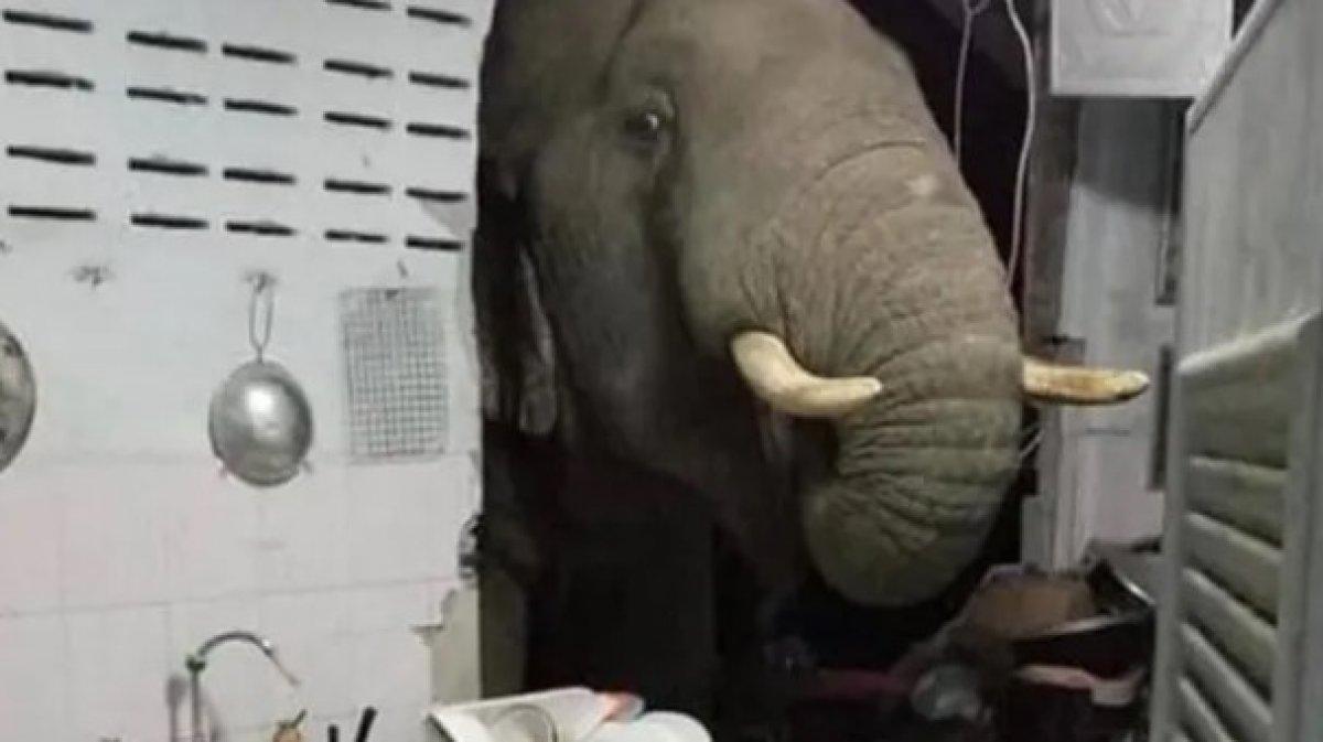 Tayland da acıkan fil evin duvarını yıktı #1