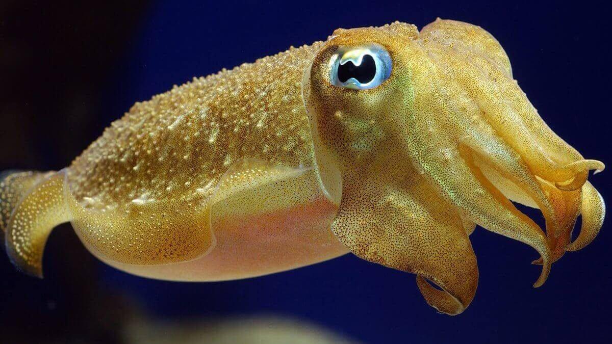 Uzayın insan sağlığına etkisini mürekkep balıkları belirleyecek #1