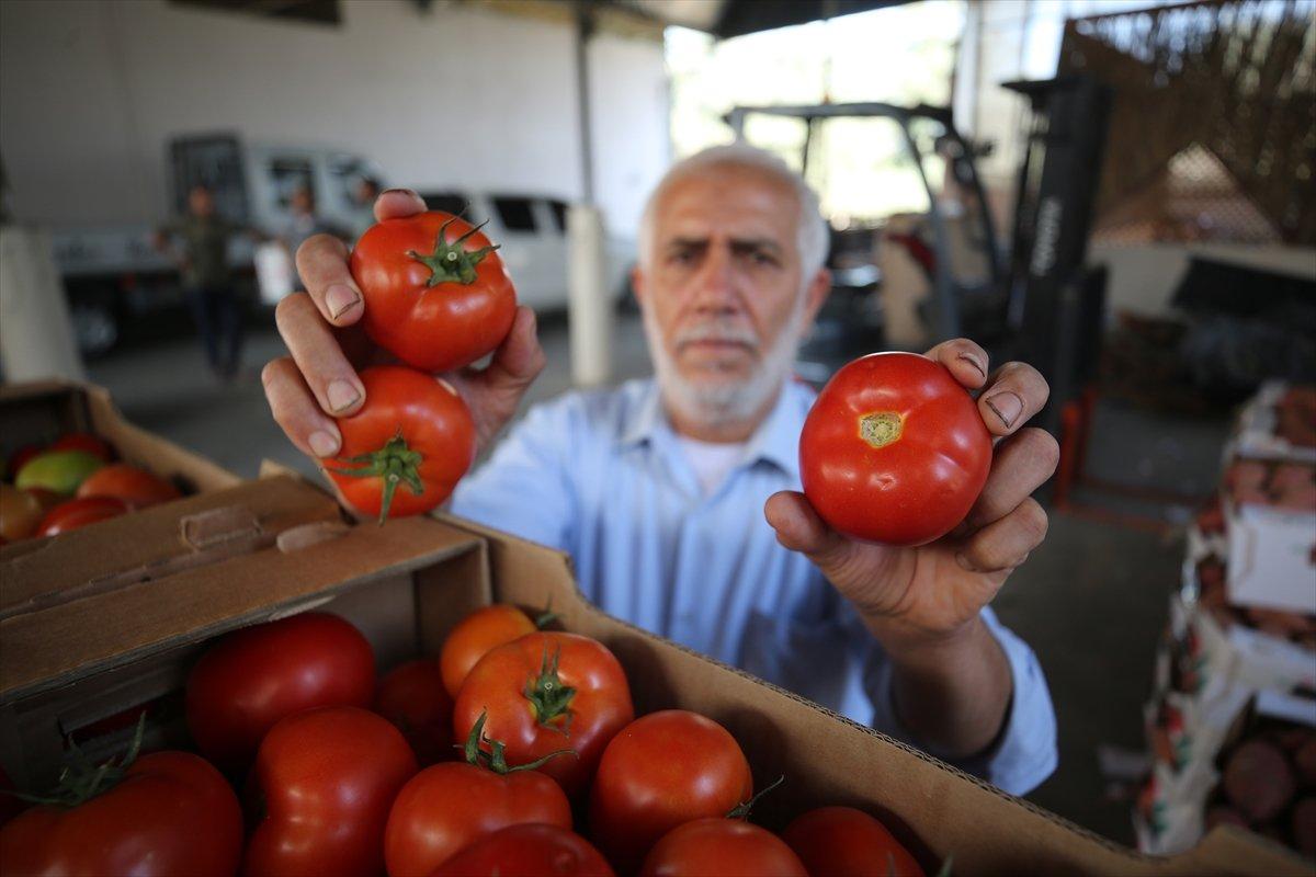 İsrail den Gazzeli çiftçi ve tüccarlara  sapsız domates  baskısı #1