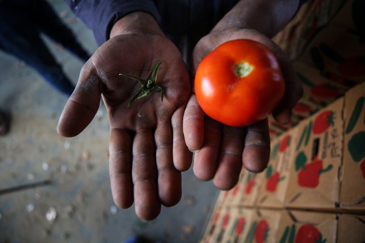İsrail den Gazzeli çiftçi ve tüccarlara  sapsız domates  baskısı #7