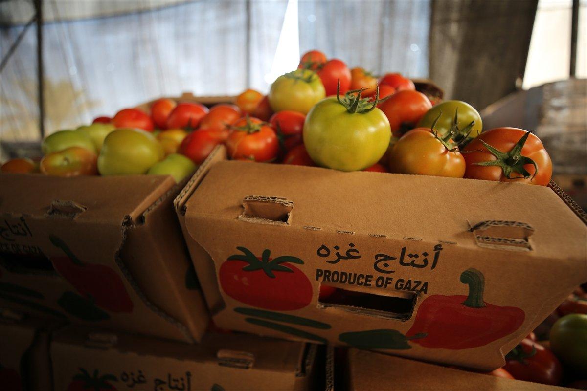 İsrail den Gazzeli çiftçi ve tüccarlara  sapsız domates  baskısı #8