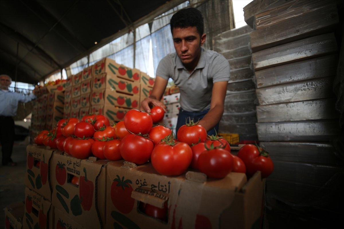 İsrail den Gazzeli çiftçi ve tüccarlara  sapsız domates  baskısı #6
