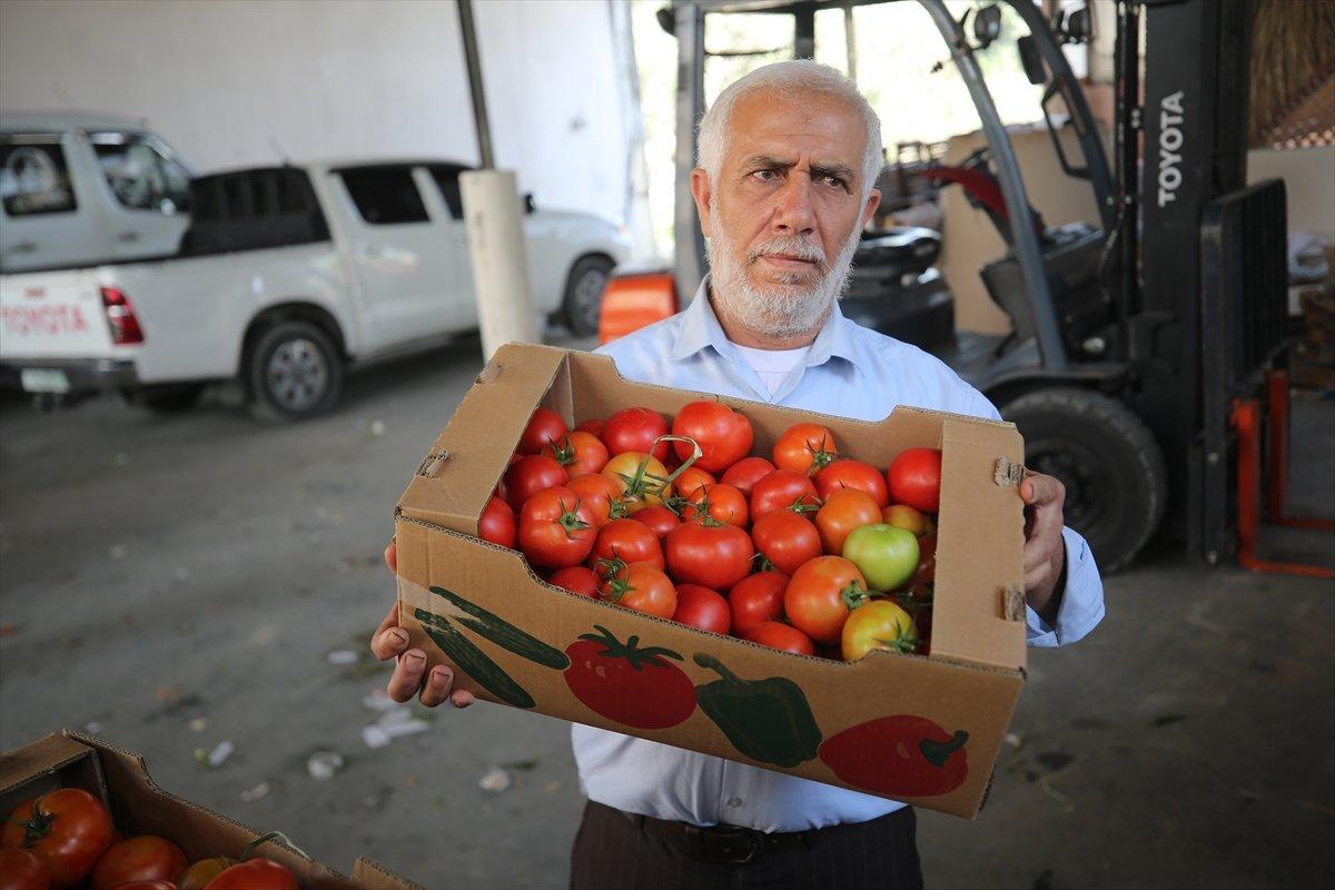 İsrail den Gazzeli çiftçi ve tüccarlara  sapsız domates  baskısı #4