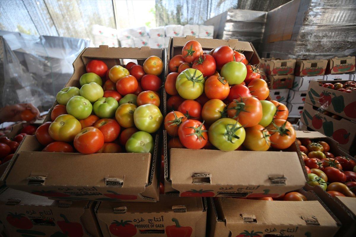 İsrail den Gazzeli çiftçi ve tüccarlara  sapsız domates  baskısı #5