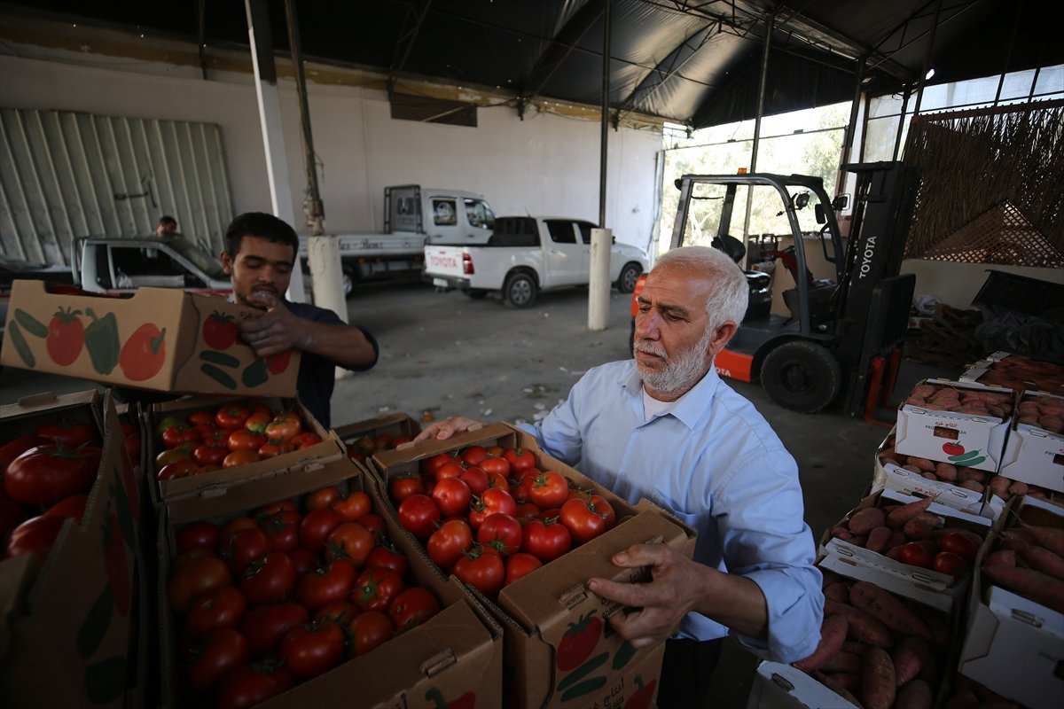 İsrail den Gazzeli çiftçi ve tüccarlara  sapsız domates  baskısı #3