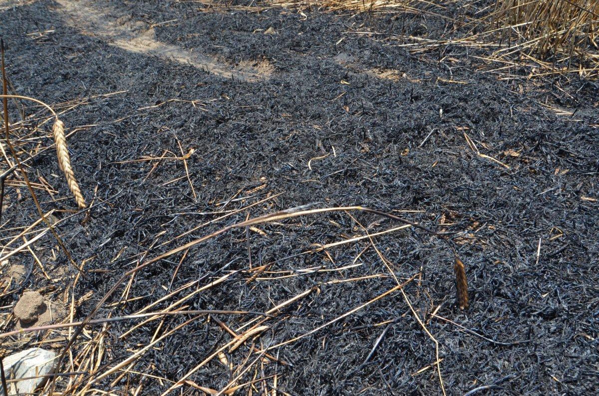 Aksaray da arpa ekili alan yandı  #6