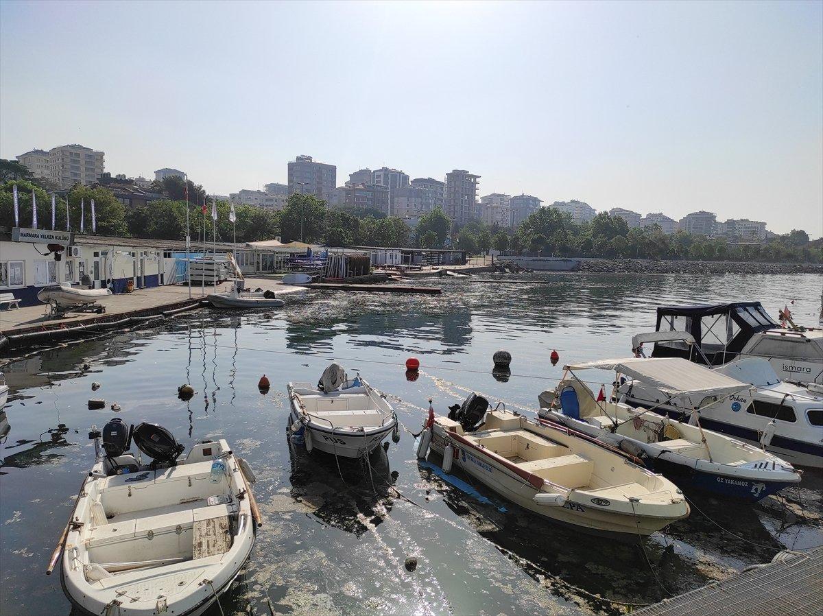 İstanbul da müsilaj yoğunluğu azalıyor #3