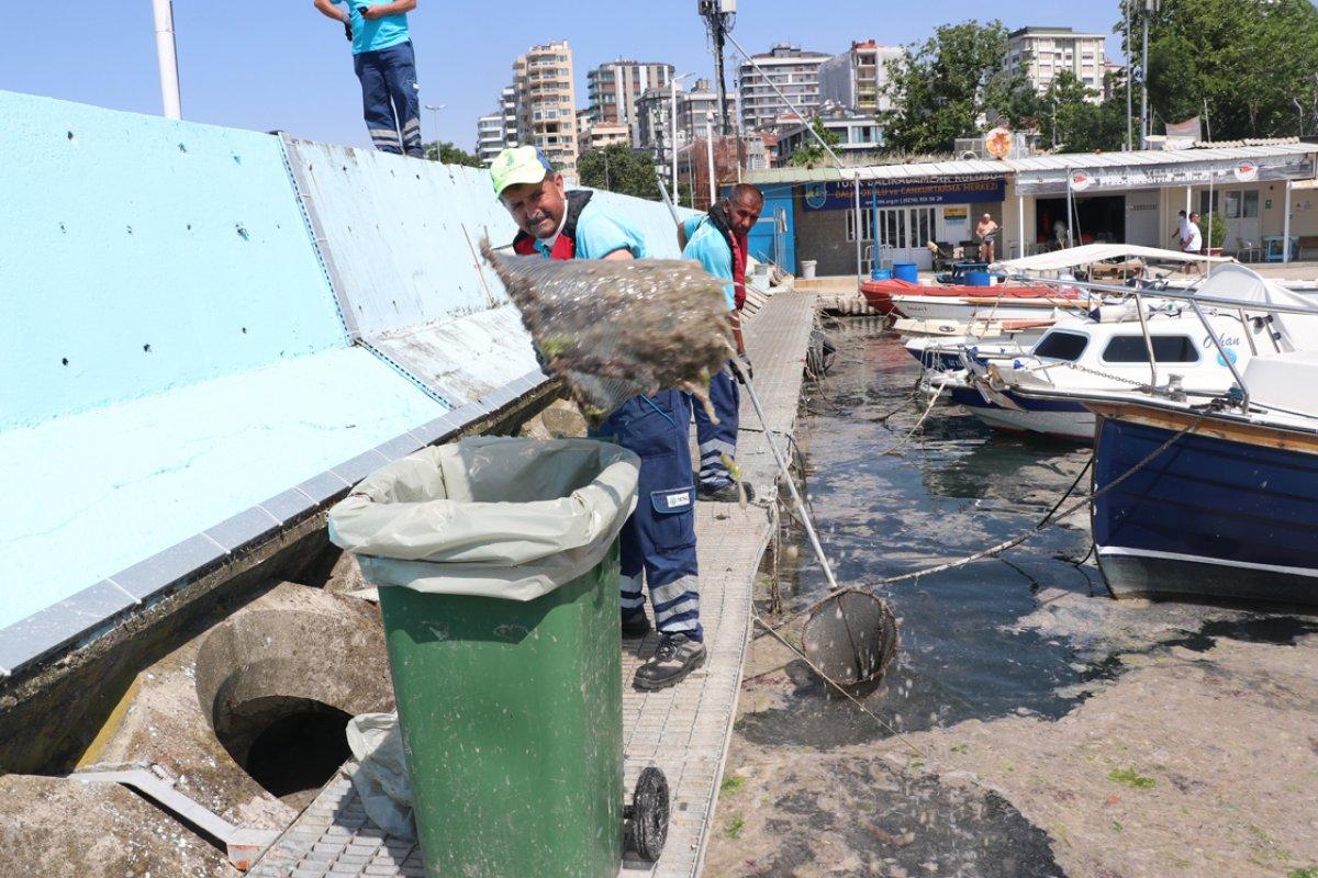 İstanbul da müsilaj yoğunluğu azalıyor #10