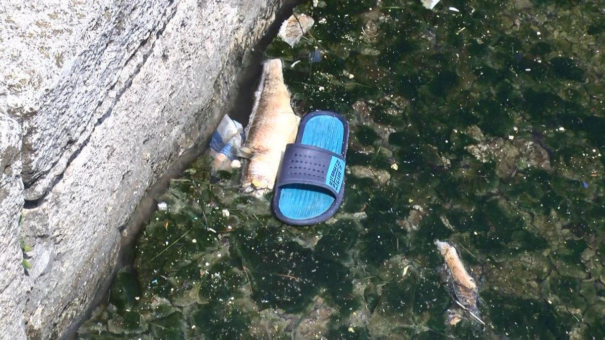 Büyükçekmece Gölü nde ölü balıklar kıyıya vurdu #1