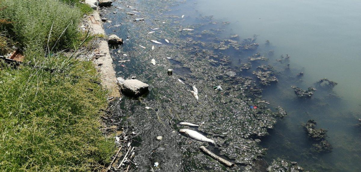 Büyükçekmece Gölü nde ölü balıklar kıyıya vurdu #5