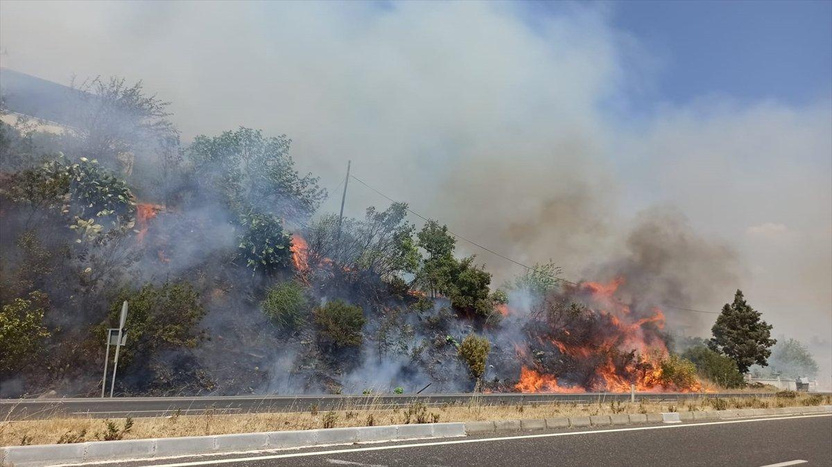 Muğla da ormanlık alanda yangın #3