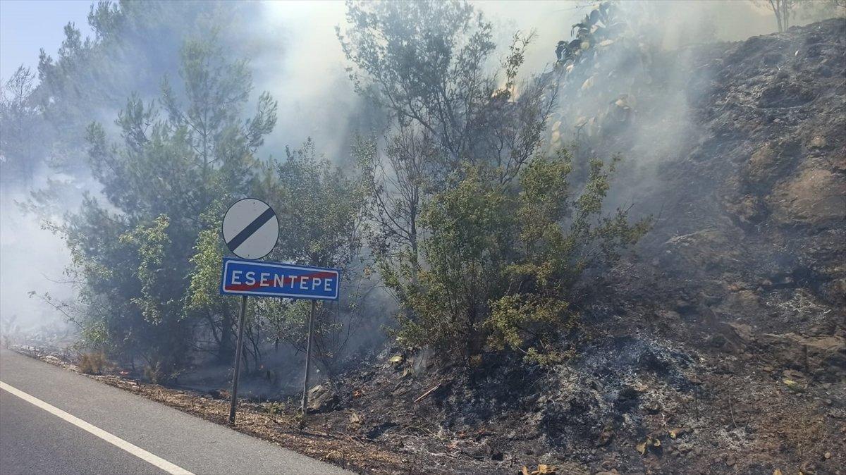 Muğla da ormanlık alanda yangın #4