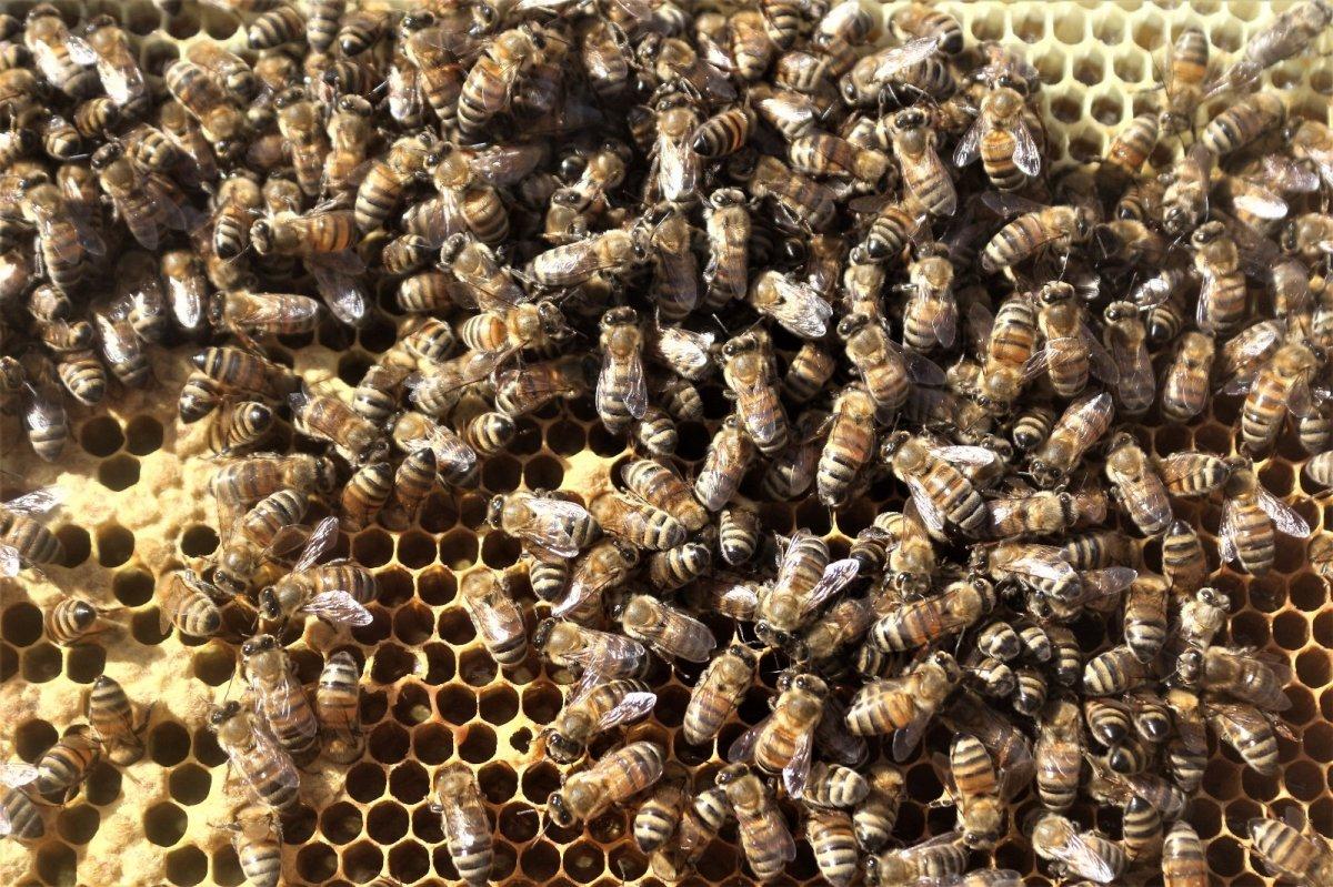 Van da kuraklıktan arıcıları etkiledi #3