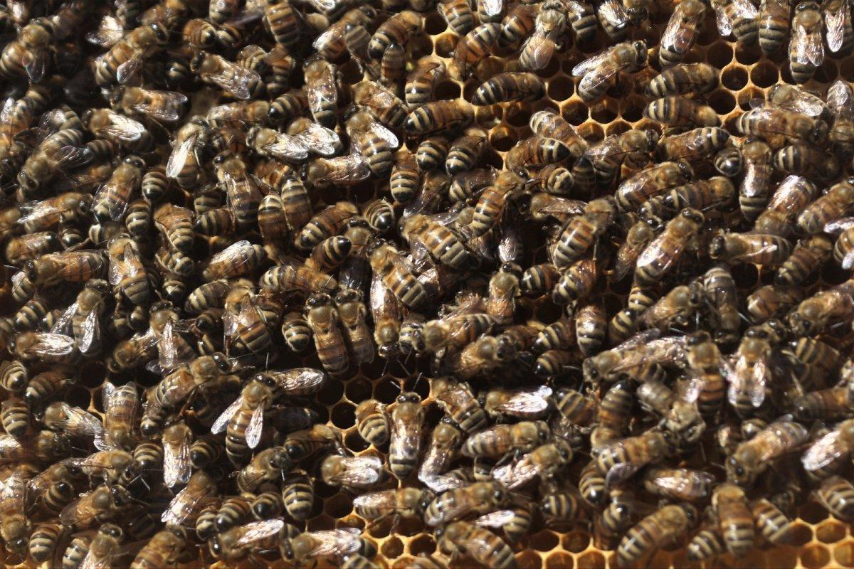 Van da kuraklıktan arıcıları etkiledi #4