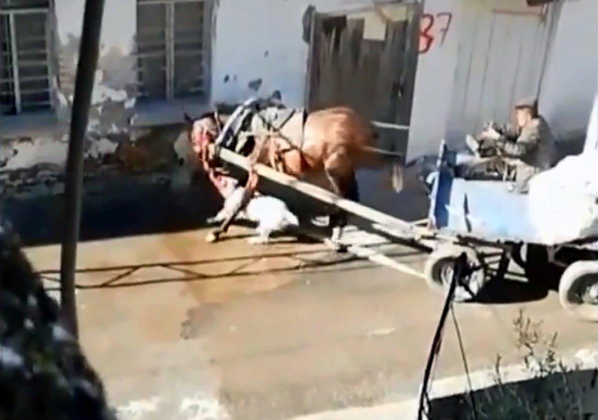 Adana'da sahipsiz pitbull atı ısırdı #3