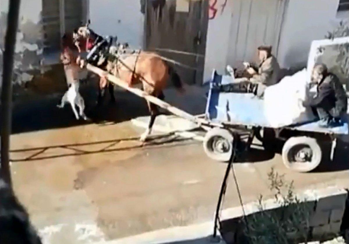 Adana'da sahipsiz pitbull atı ısırdı #2
