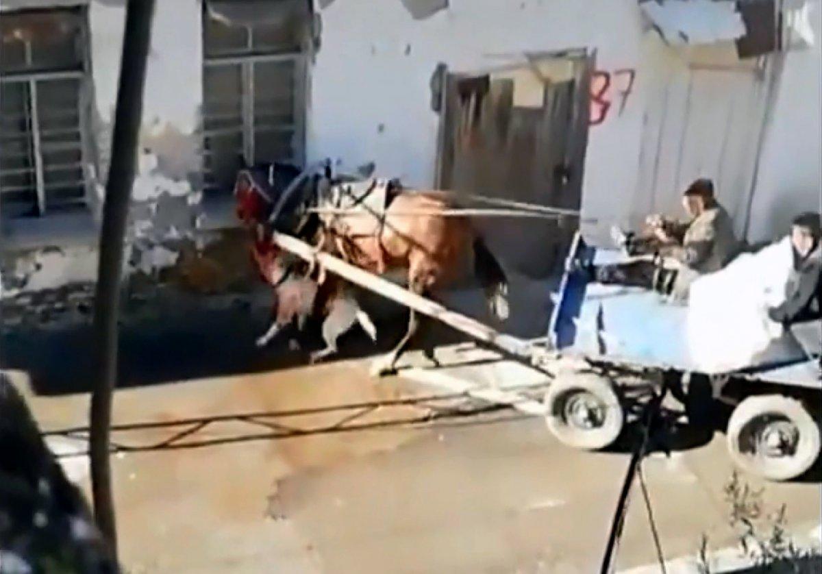 Adana'da sahipsiz pitbull atı ısırdı #4