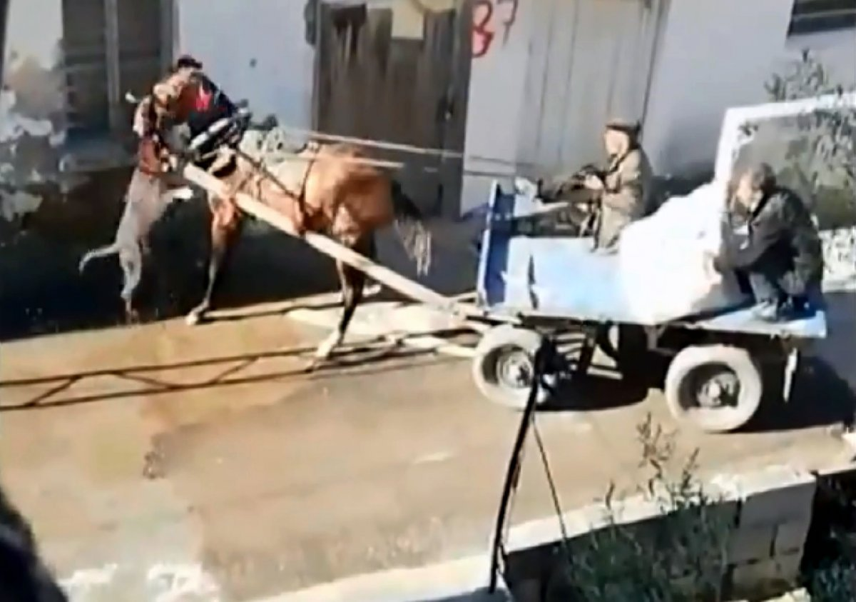 Adana'da sahipsiz pitbull atı ısırdı #1