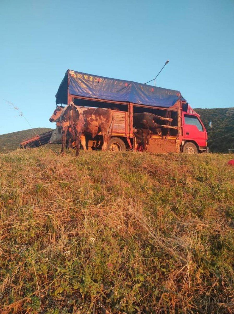 Bursa da kamyon kasasında boğa güreşi: 1 i telef oldu #2