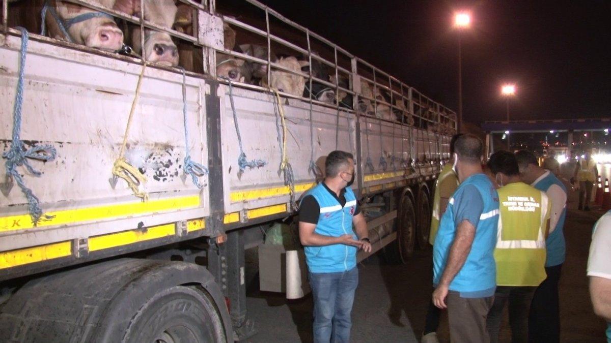 İstanbul'a kurbanlık hayvanların girişi başladı #7