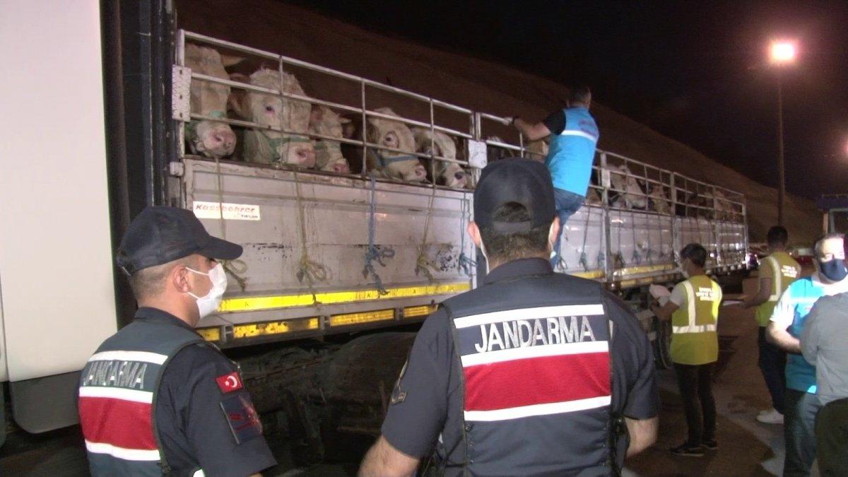 İstanbul'a kurbanlık hayvanların girişi başladı #1
