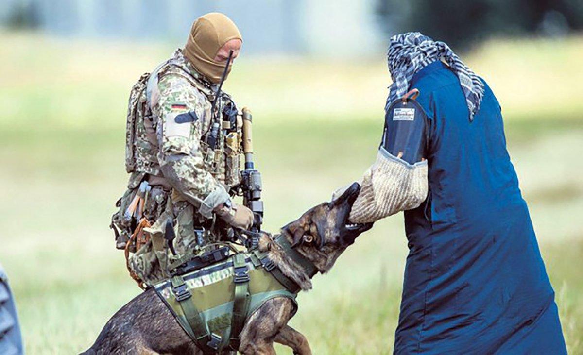 Almanya daki tatbikatta köpekler, başörtülü kadın üzerinde eğitildi #2