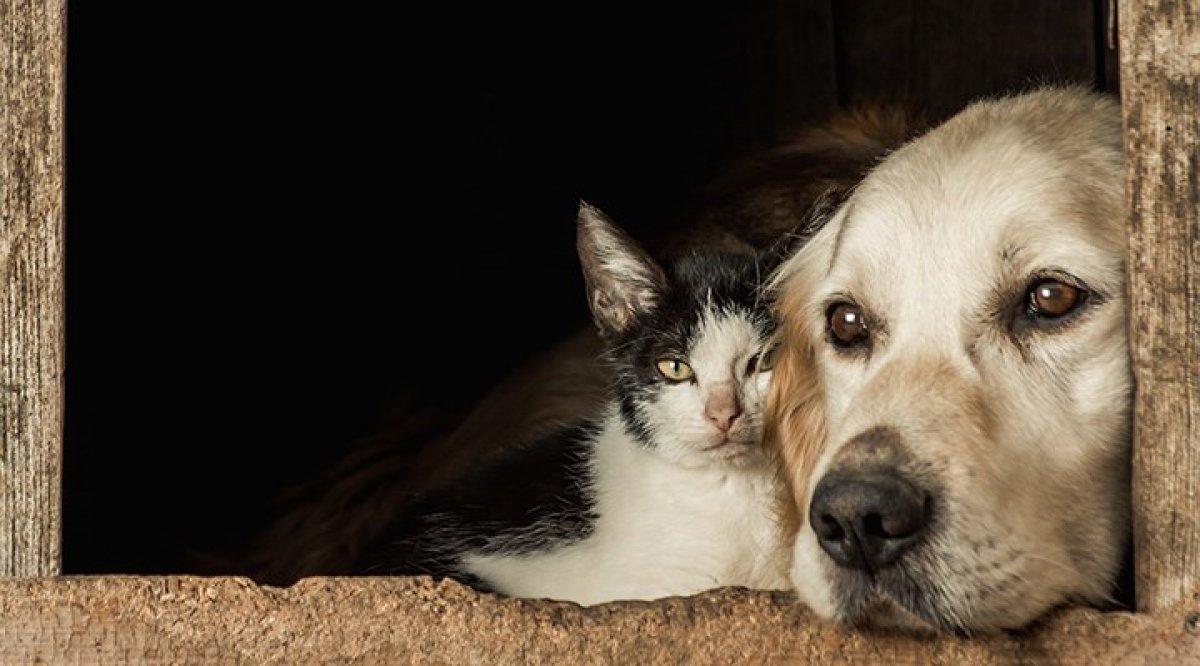 Hayvanları Koruma Kanunu na ilişkin kanun teklifi komisyondan geçti #2