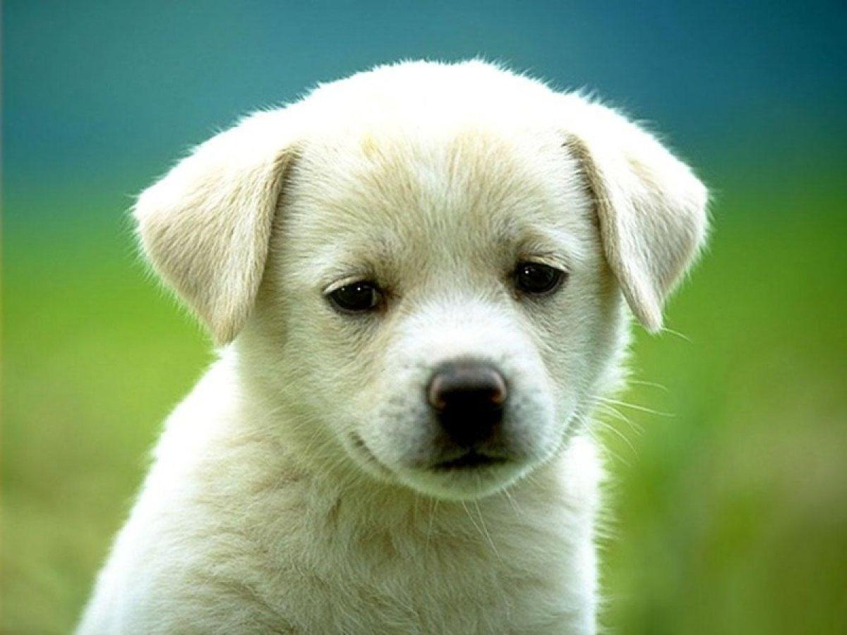 Hayvanları Koruma Kanunu na ilişkin kanun teklifi komisyondan geçti #1