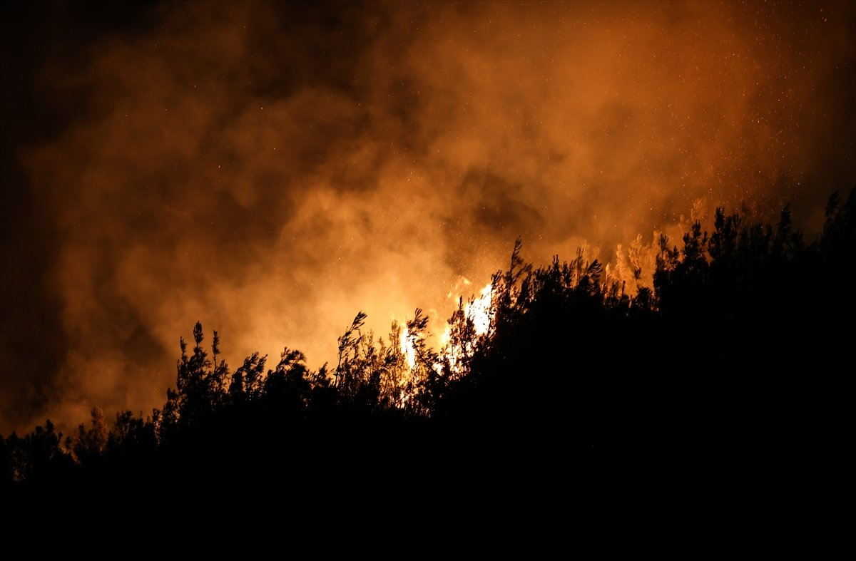 Foça da orman yangını #2