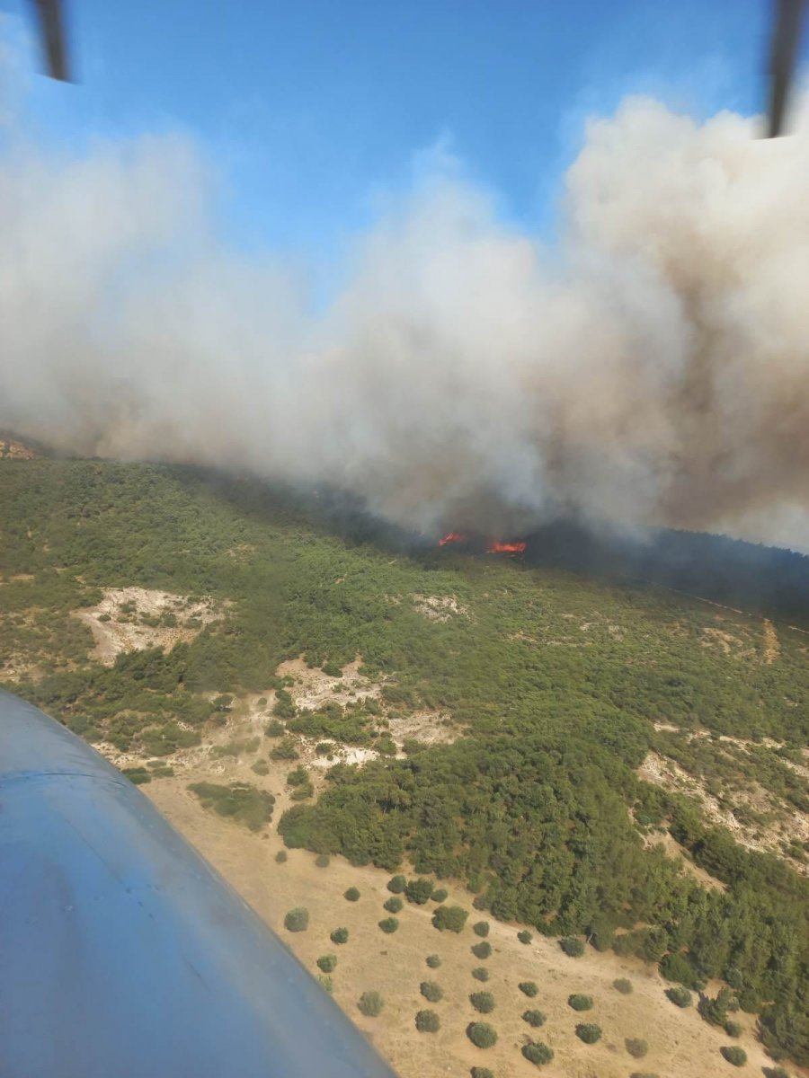 Foça da orman yangını #9