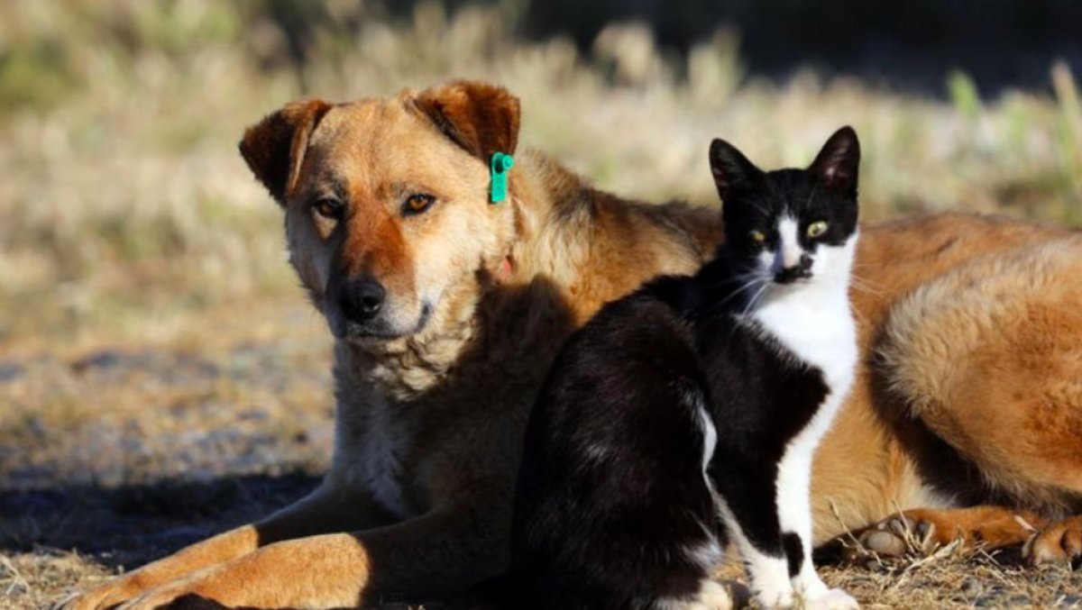 Hayvanları Koruma Kanunu TBMM'de kabul edildi