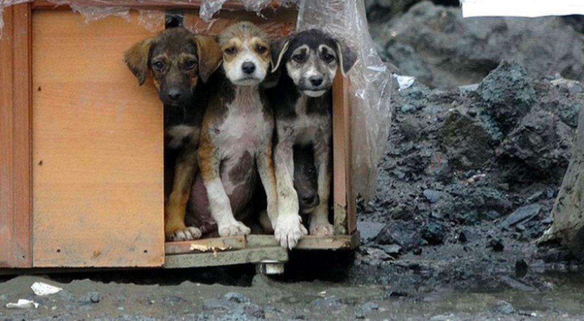 Hayvanları Koruma Kanunu TBMM de kabul edildi #2