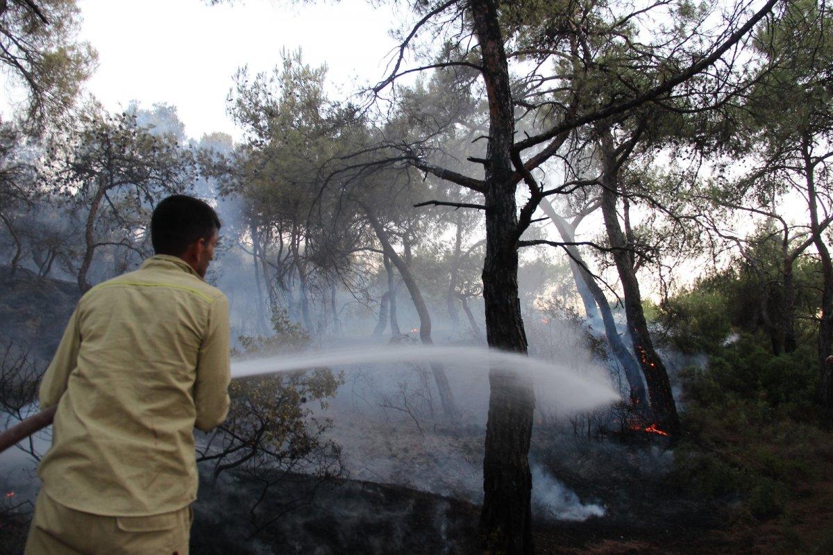 İzmir Foça da orman yangını kontrol altına alındı #2