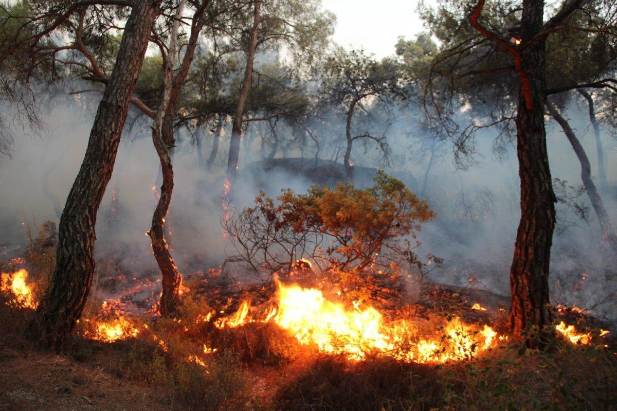 İzmir Foça da orman yangını kontrol altına alındı #1