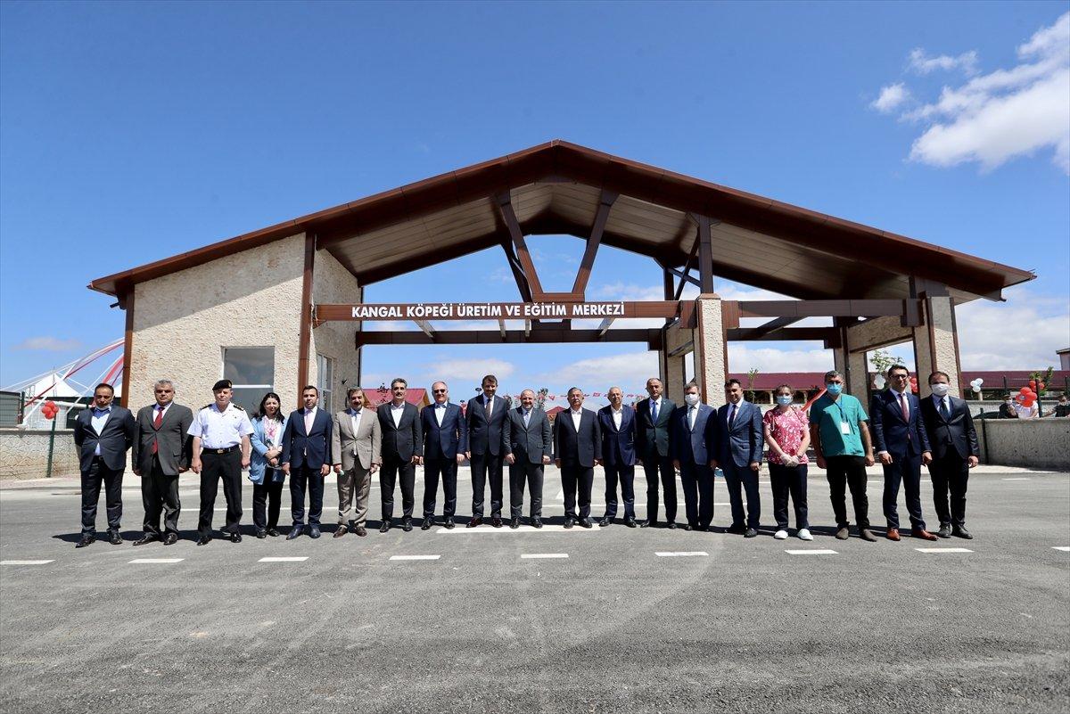 Sivas ta kangal köpeği üretim ve eğitim merkezi açıldı #2