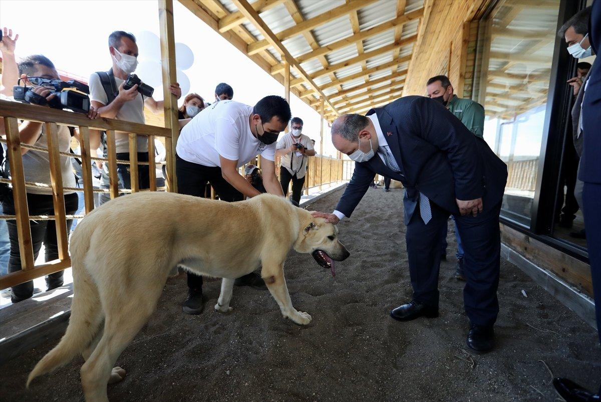 Sivas ta kangal köpeği üretim ve eğitim merkezi açıldı #1