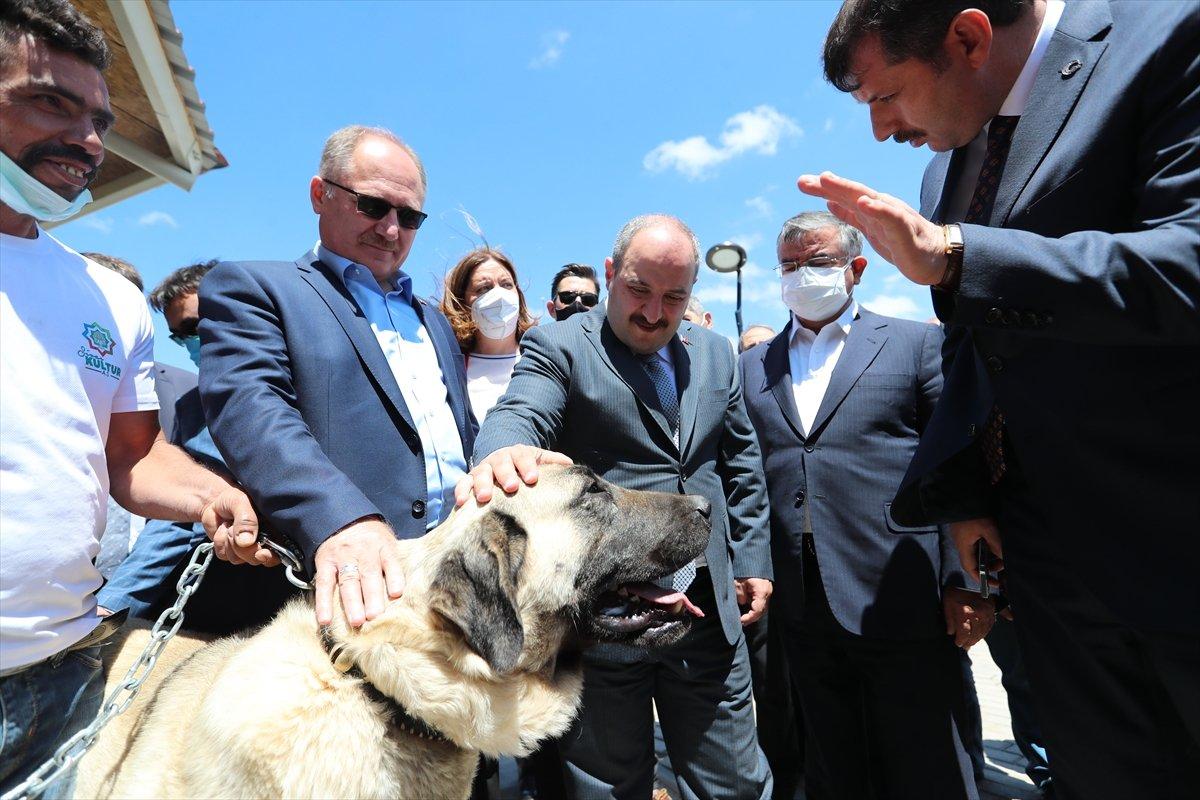 Sivas ta kangal köpeği üretim ve eğitim merkezi açıldı #4