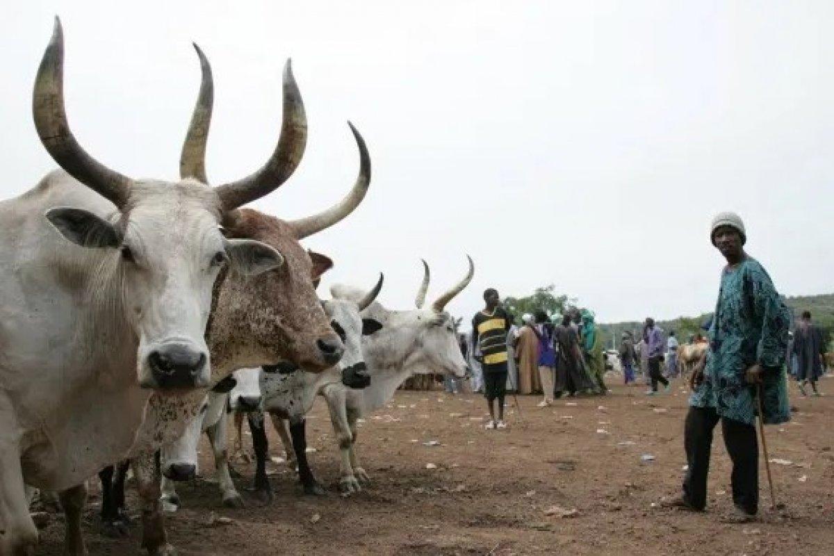 Nijerya da kabileler arası intikam saldırısı: 35 ölü #1