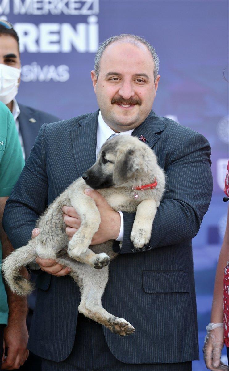 Sivas ta kangal köpeği üretim ve eğitim merkezi açıldı #7