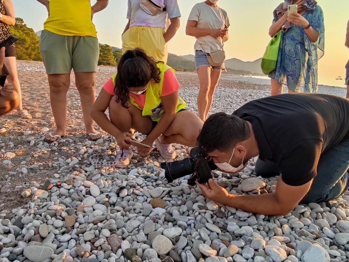 Antalya da caretta caretta yavrularının denize doğru zorlu yolculuğu başladı #4