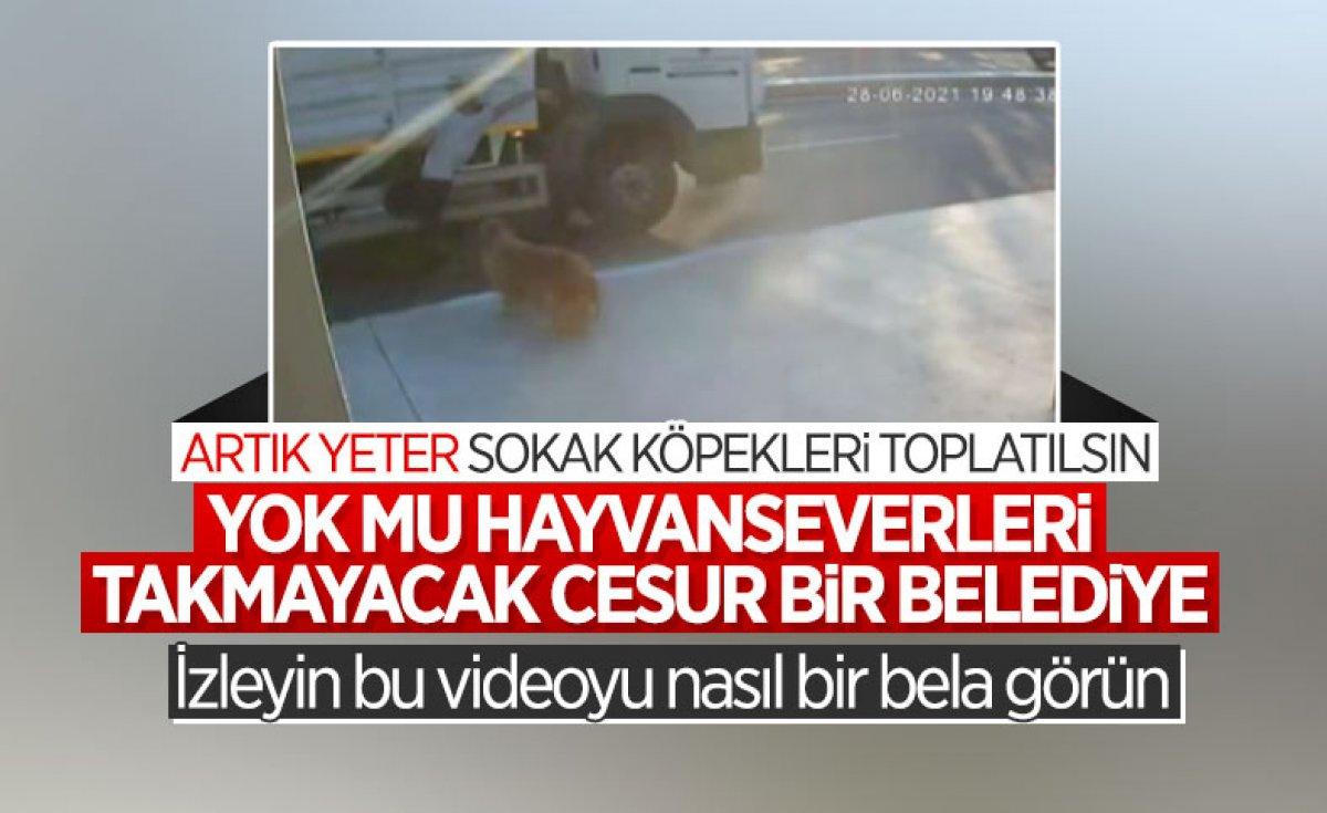 İstanbul da köpekten kaçarken kamyon çarpan genç hayatını kaybetti #4