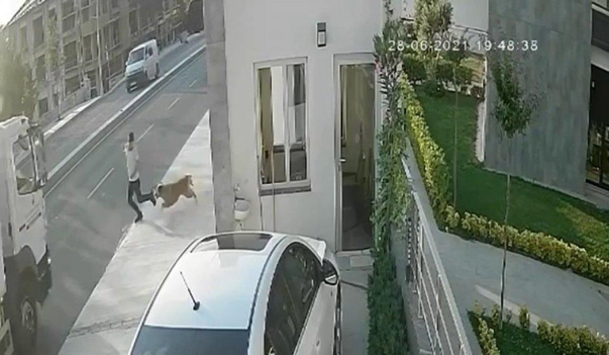 İstanbul da köpekten kaçarken kamyon çarpan genç hayatını kaybetti #2