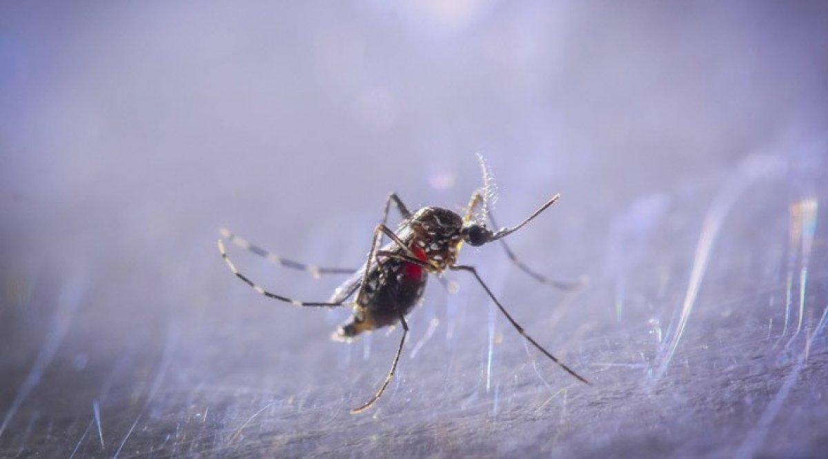 İstanbul da Asya Kaplan Sivrisineği istilası #1